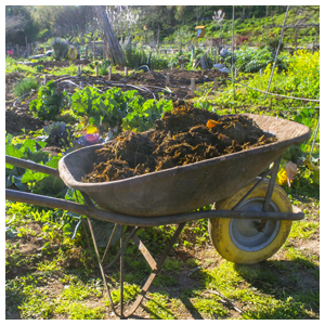 Compost & Composting Supplies
