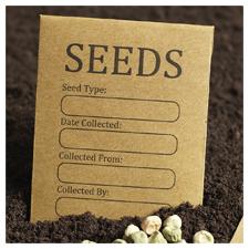 Seeds - Organic & Heirloom