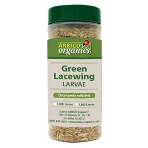 Green Lacewing Larvae