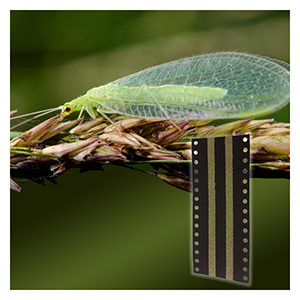 Green Lacewing Eggs - Hanging Cards