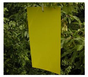 Stiky Strips® Yellow Sticky Traps - Stiky Strips Traps - 9 pk