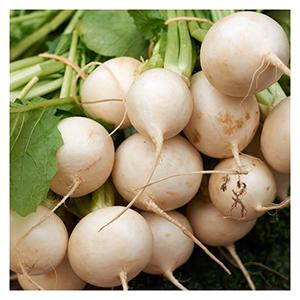 Territorial Seeds - Golden Ball Turnip
