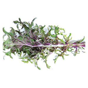 Territorial Seeds - Red Russian Kale