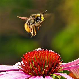 Enjoying My Bee Garden