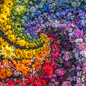Color and Inspiration in the Garden