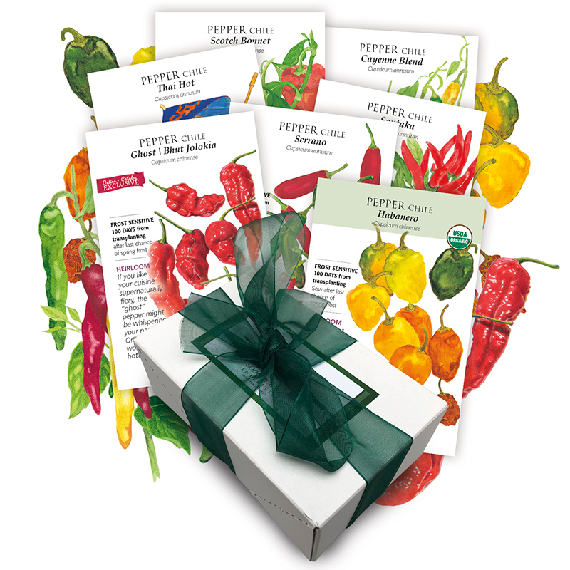 Chile Pepper Collection