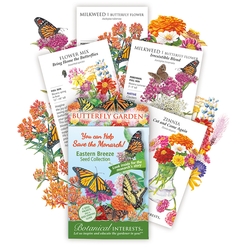 Eastern Breeze Butterfly Collection