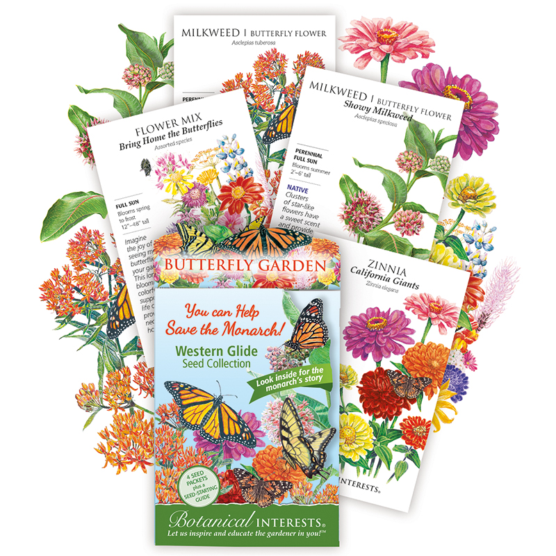 Western Glide Butterfly Collection