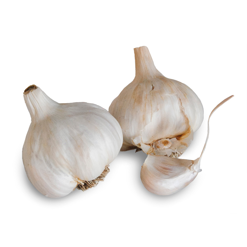Sicilian Silver Softneck Garlic