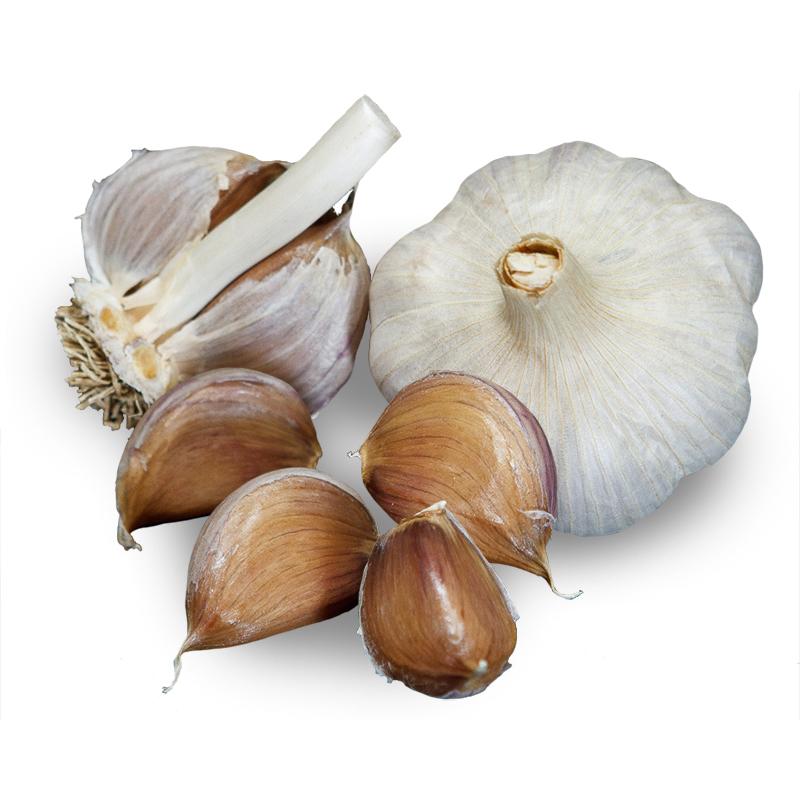 Carpathian Hardneck Garlic