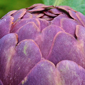 Artichoke: Sow and Grow Guide