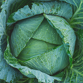 How to Plan Your Fall Vegetable Garden