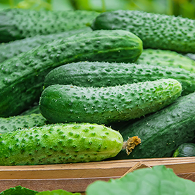 Cucumber: Sow and Grow Guide