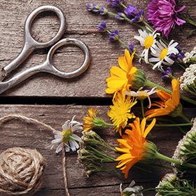 Cut-Flower Gardening—10 Tips for Success!