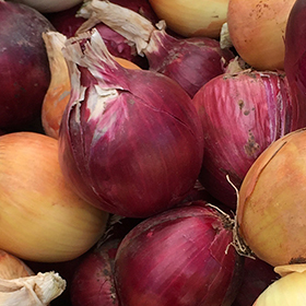 Onion: Sow and Grow Guide