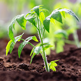 What Makes a Seed Organic?