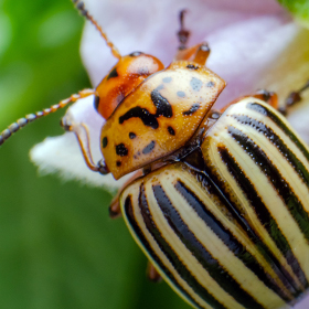 Pests ID, Prevention, and Control