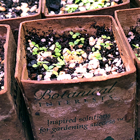 Germination Issues and Troubleshooting
