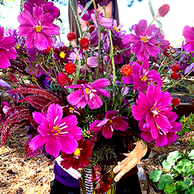 Cut Flowers: Choosing and Arranging