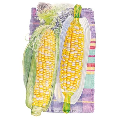 Honey and Cream Sweet Corn Seeds - New Size