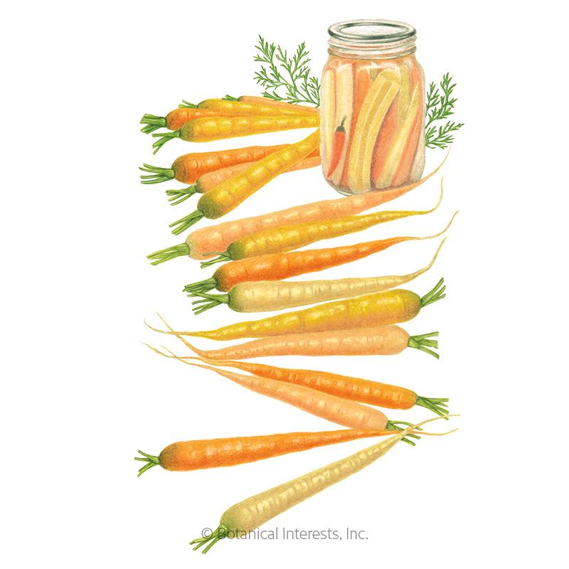 Rainbow Carrot Seeds - New