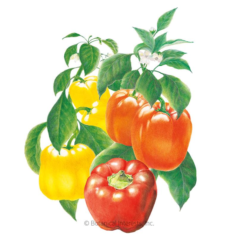 Sweet Bell Blend Sweet Pepper Seeds - New