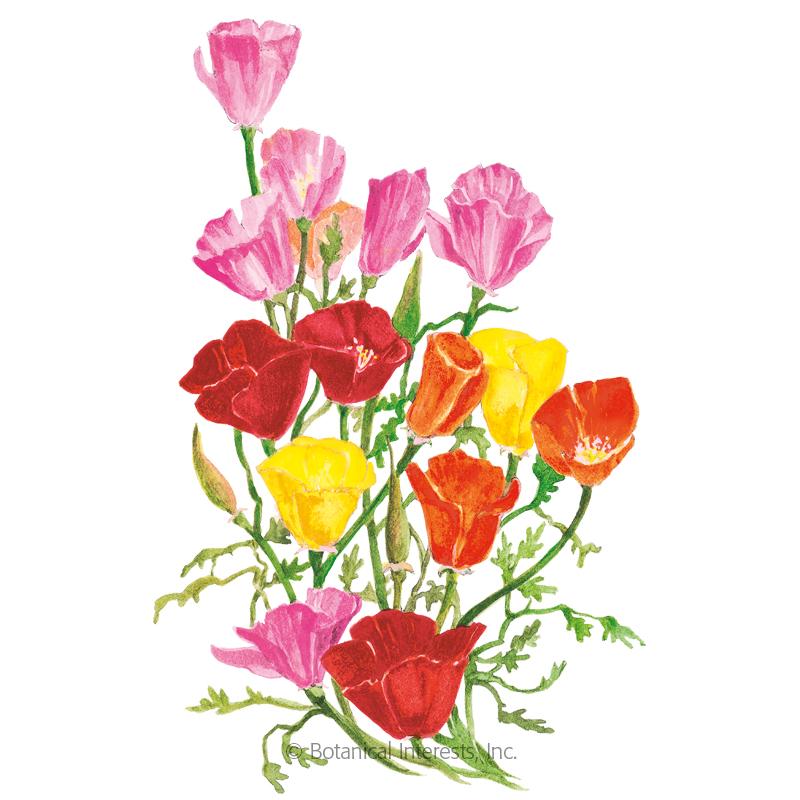 Spring Melody Blend California Poppy Seeds