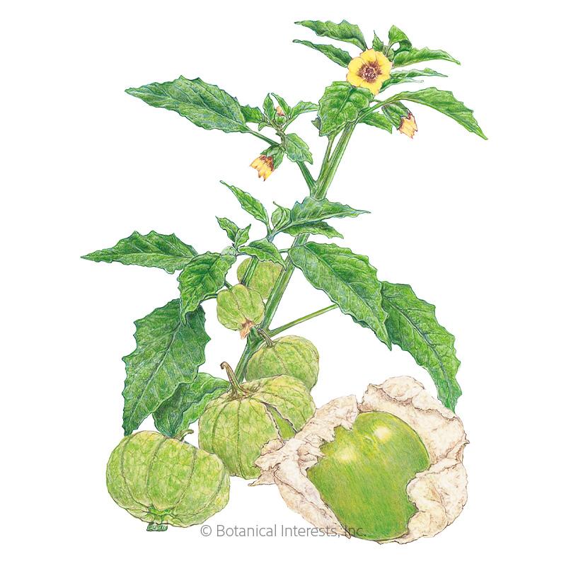 Grande Rio Verde Tomatillo Seeds - New