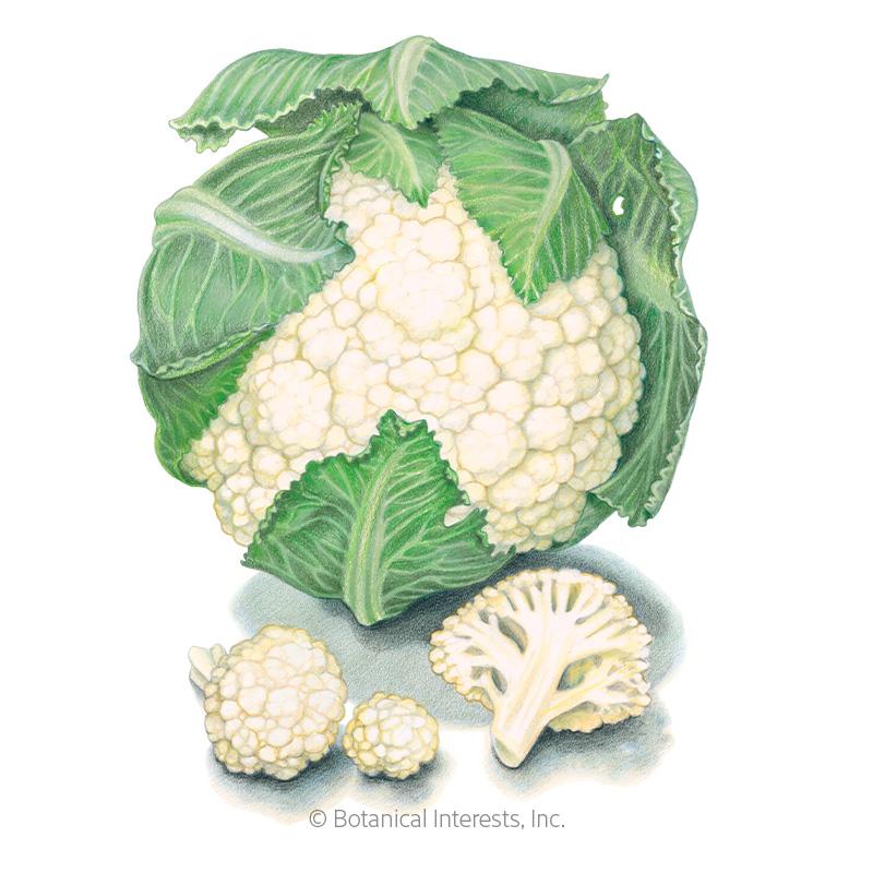 Snowball Y Cauliflower Seeds