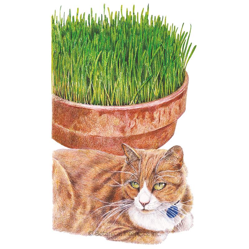 Cat Grass Oats Seeds
