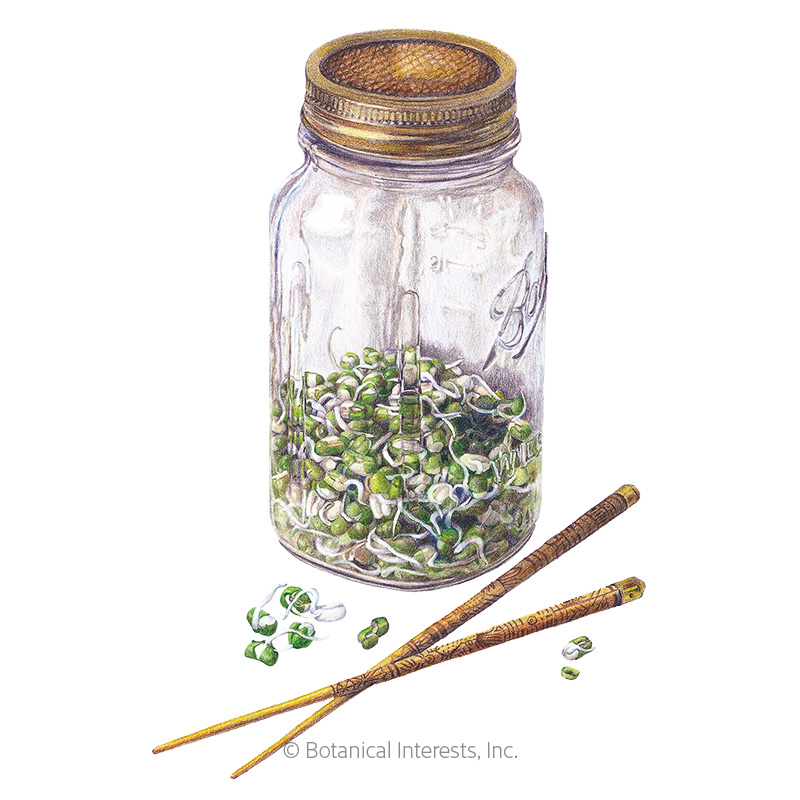 Mung Bean Sprouts Seeds