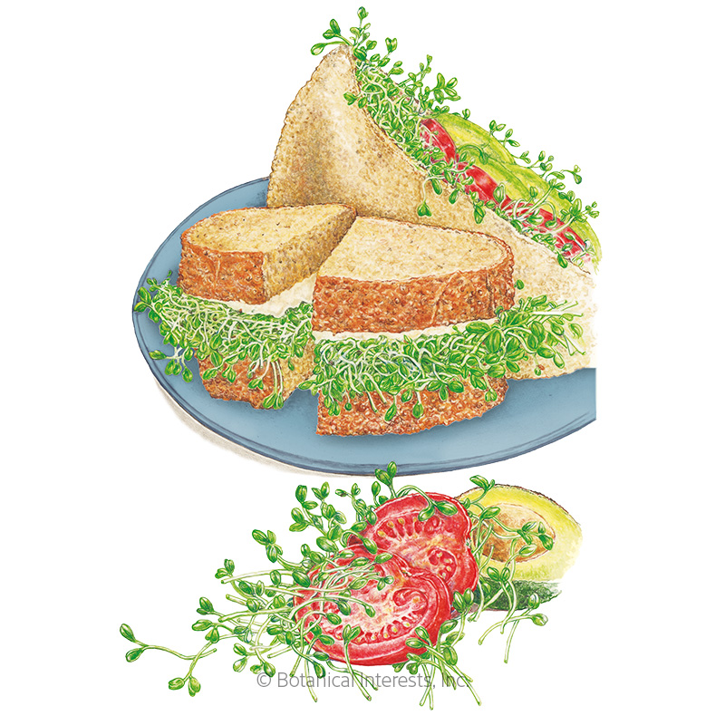 Sandwich Mix Sprouts Seeds