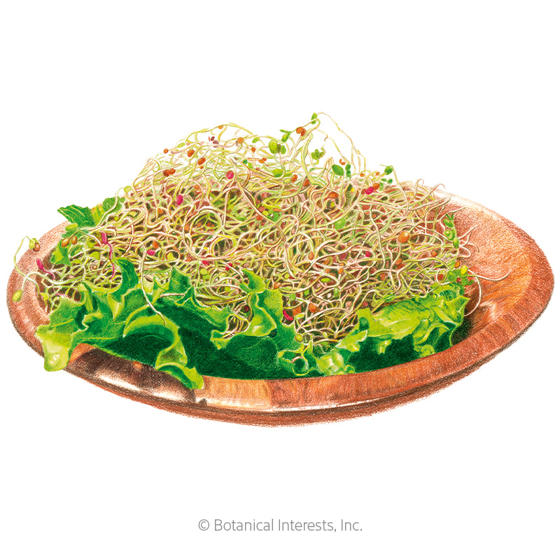 Salad Mix Sprouts Seeds