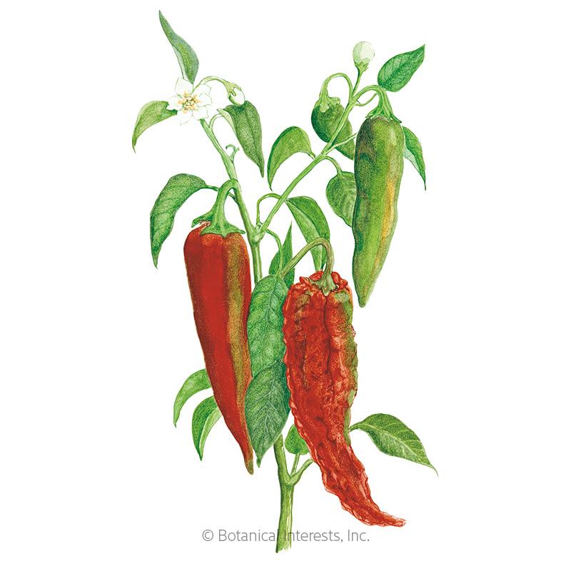 NuMex Joe E. Parker Chile Anaheim Pepper Seeds