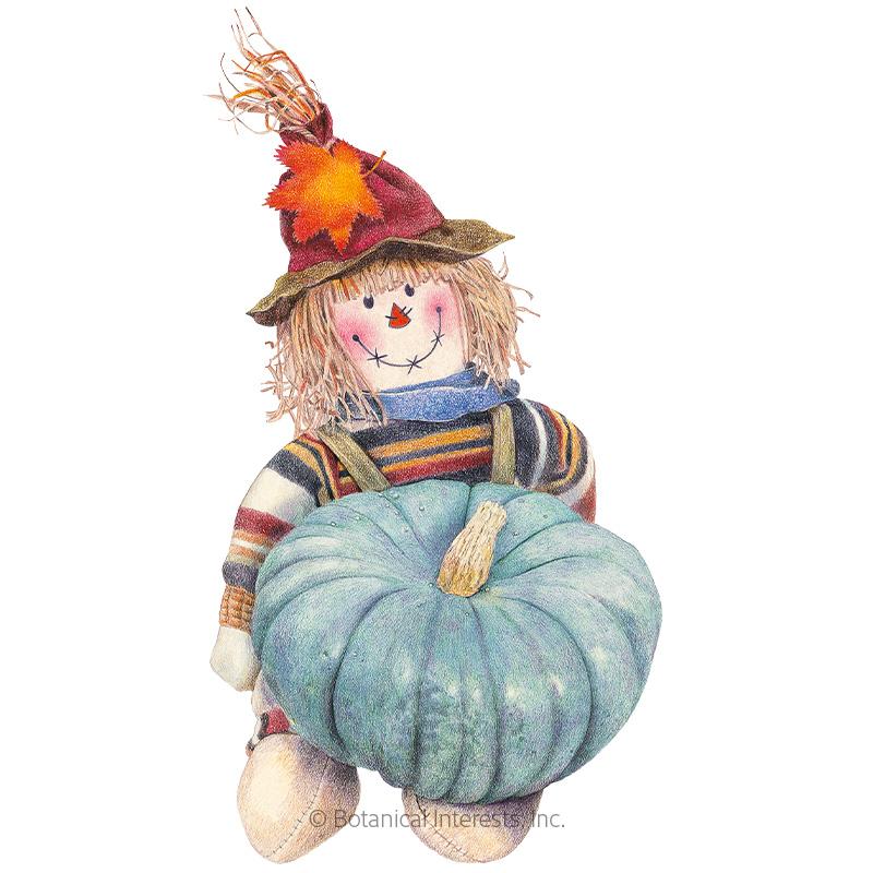 Jarrahdale Pumpkin Seeds