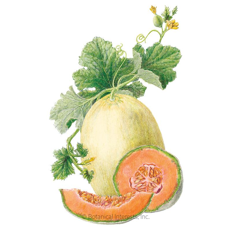 Papaya Dew Melon Seeds