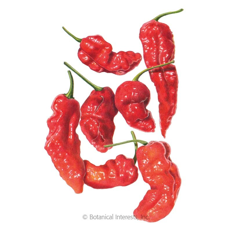 Ghost Bhut Jolokia Chile Pepper Seeds
