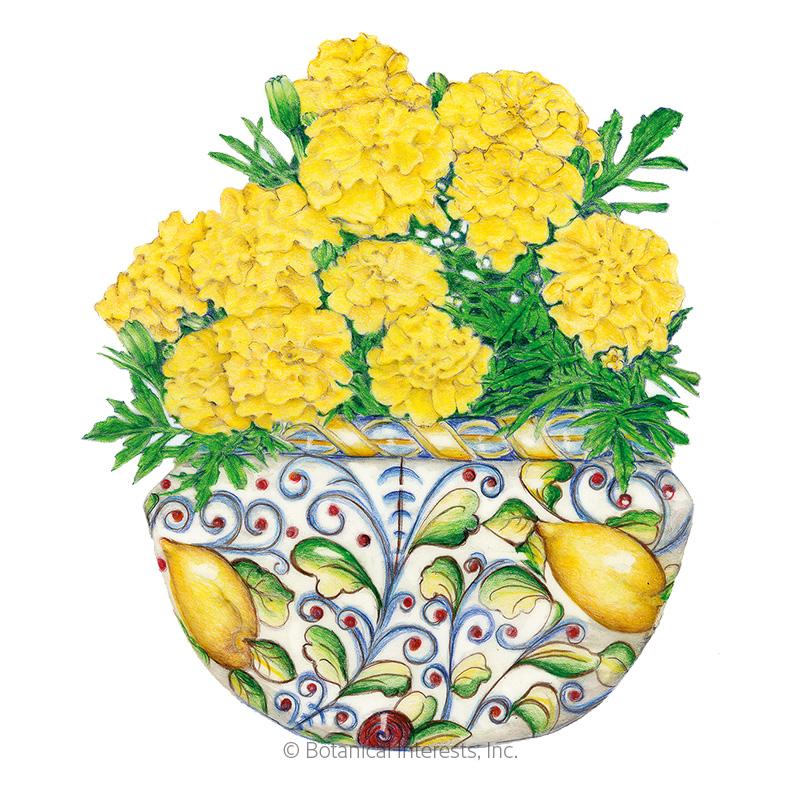 Lemon Drop French Marigold Seeds