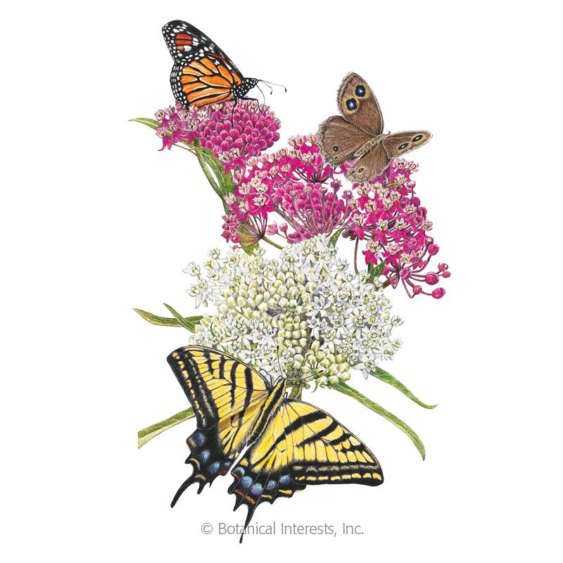 Irresistible Blend Milkweed/Butterfly Flower Seeds