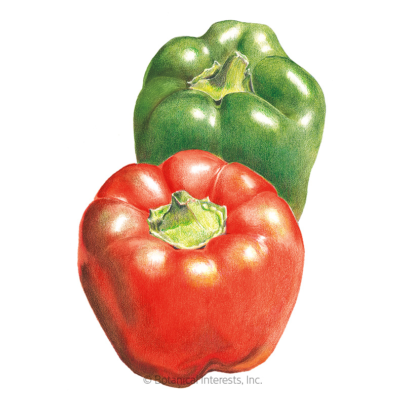 California Wonder Sweet Pepper Seeds