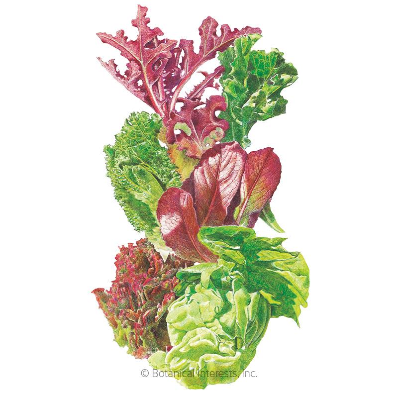 Gourmet Baby Greens Mesclun Lettuce Seeds