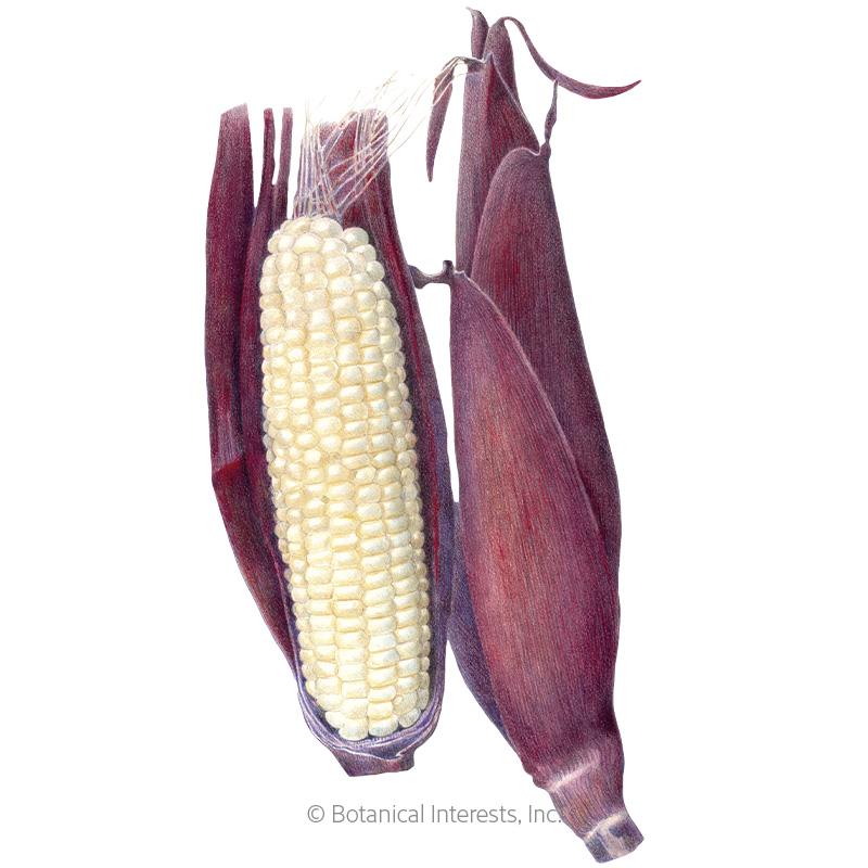 Martian Jewels Sweet Corn Seeds
