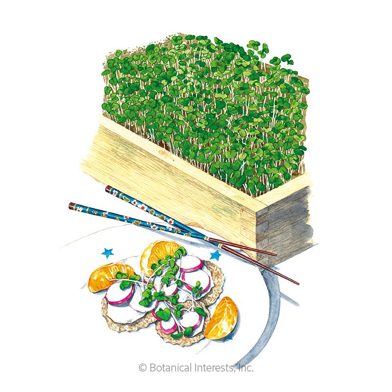 Umami Asian Blend Microgreens Seeds