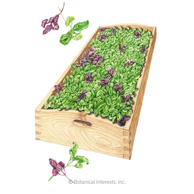 Ciao Bella Basil Blend Microgreens Seeds