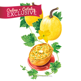 Angel Hair Winter Spaghetti Squash Seeds - new - Online Exclusive