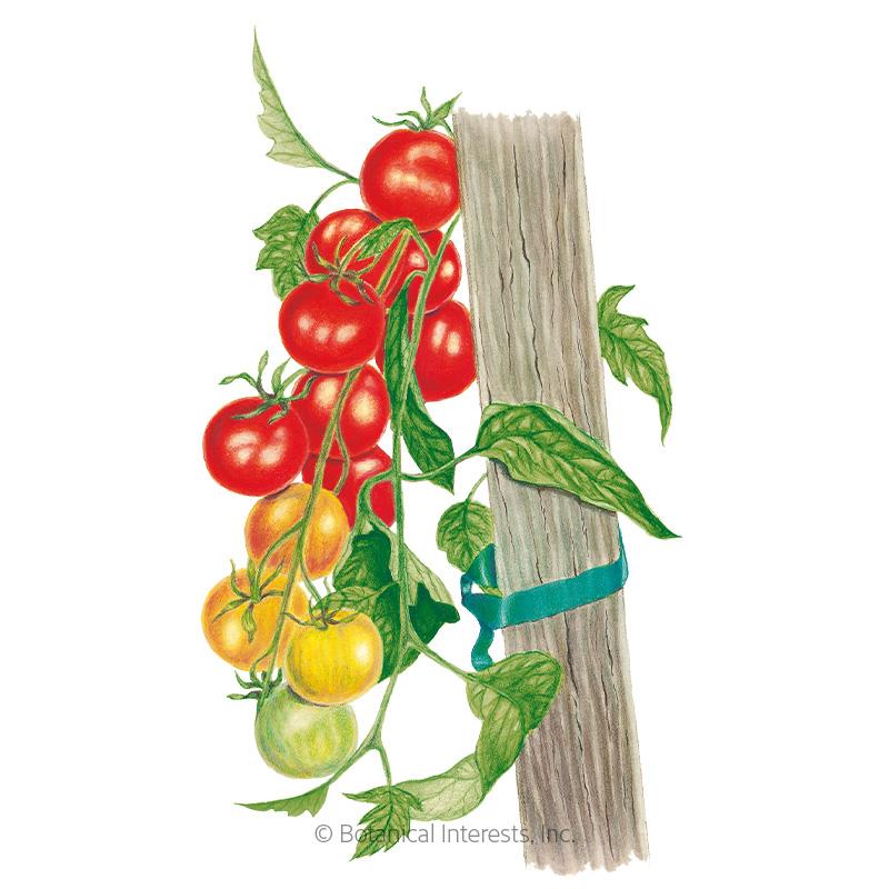 Gardener's Delight Pole Cherry Tomato Seeds