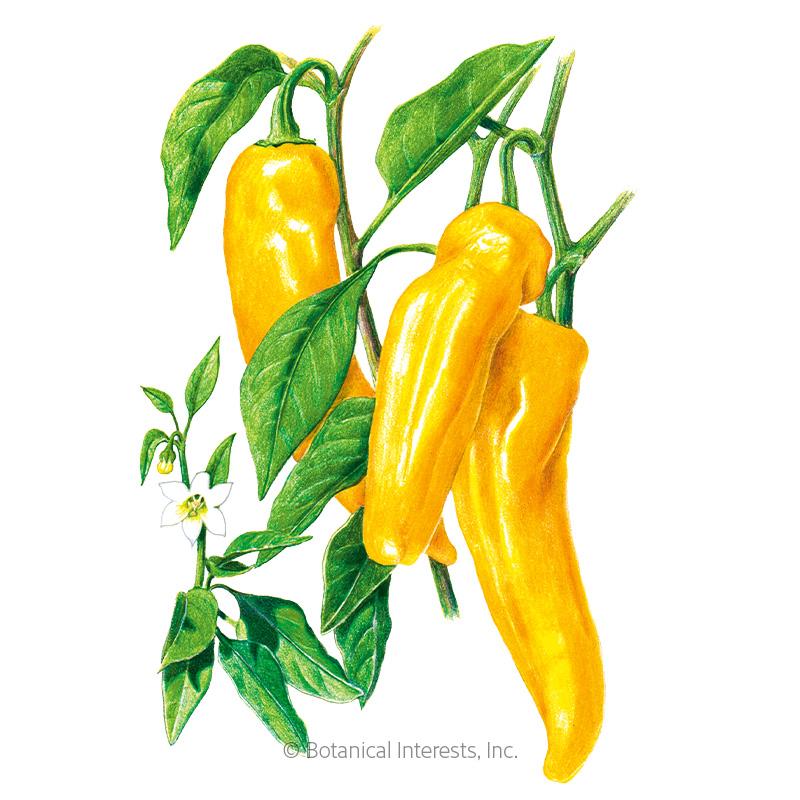 Golden Marconi Sweet Pepper Seeds - Online Exclusive