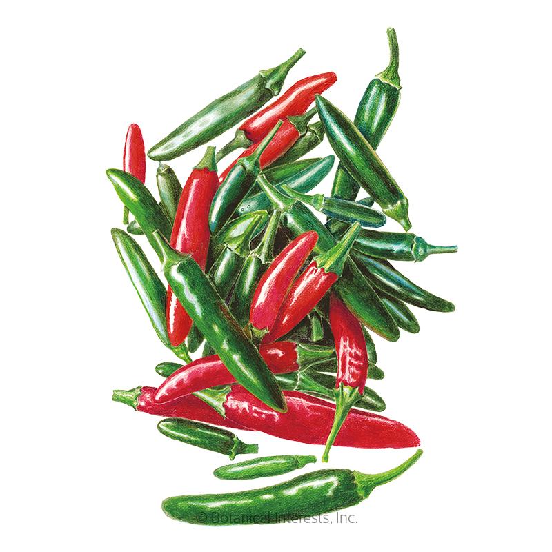 Serrano Chile Pepper Seeds