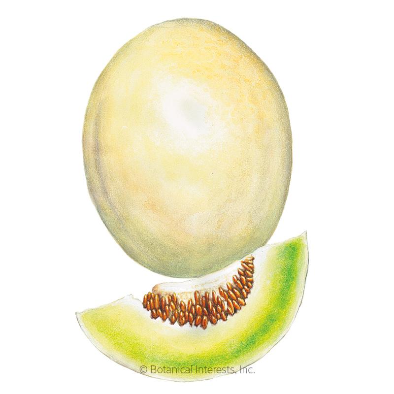 Sweet Delight Honeydew Melon Seeds