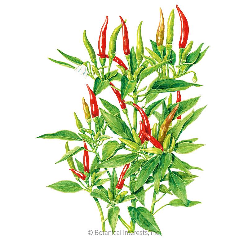 Thai Hot Chile Pepper Seeds